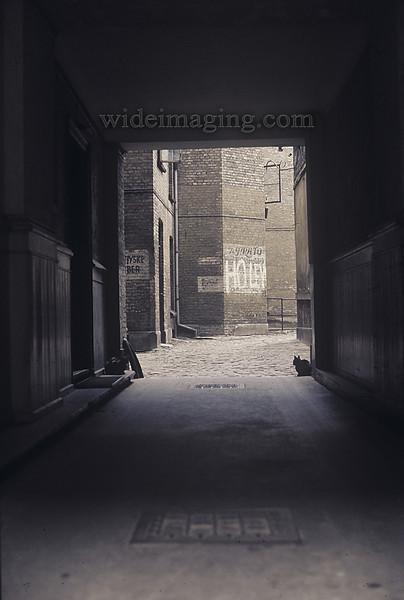 Copenhagen 1971: 2 cats in an alley