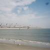 Seaguls on Sullivan's Island
