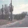 Beside Giant Cactus - State Flower
