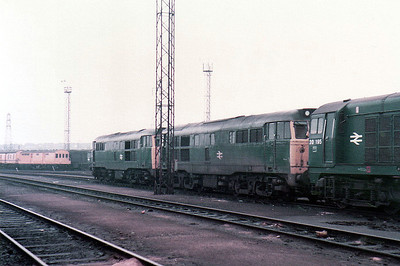 (L-R) 31243_31198_20195 Toton (TO).