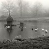 Hartley Wintney Frozen Duck Pond Dec 94