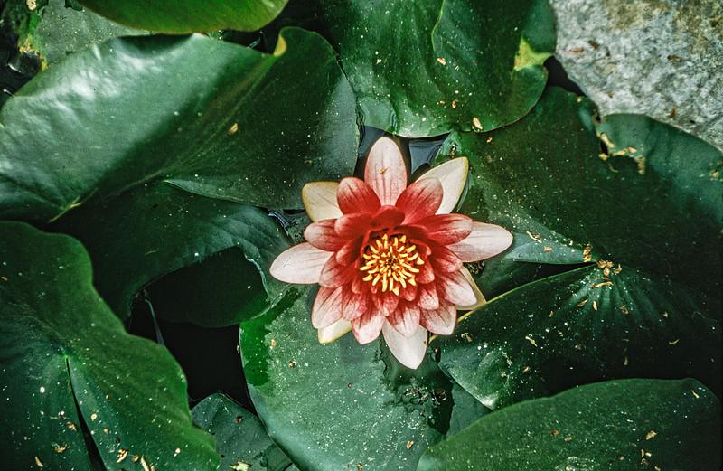 1962-05 Flower-Edit