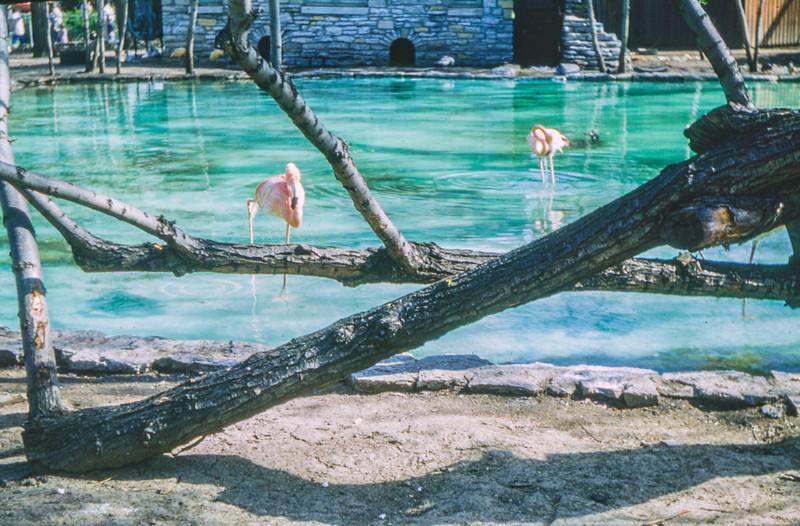 1962-08 Water scene