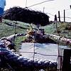 'Sambo's grave'