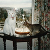Henry, the white cat, and a very young Stripes, or is it Maurice and Katy?