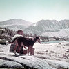 Ken Greene. Lucky.  Backpacking in Sierras. Date unknown.