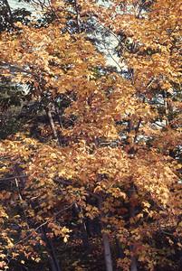 foliage_1969-012