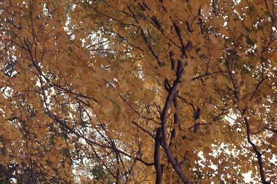 foliage_1969-006