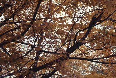 foliage_1969-011