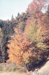 foliage_1969-002
