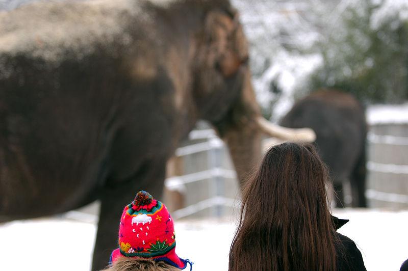 Bewondering the majesty. Zoo Zurich.