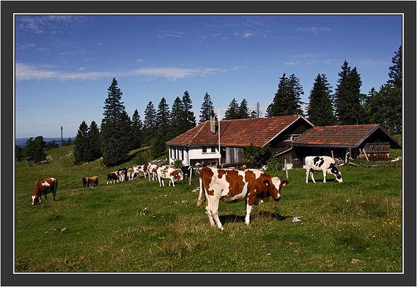 Vue des Alpes - Chasseral.<br /> <br /> Riitta & Gilu in Switzerland, August 2004