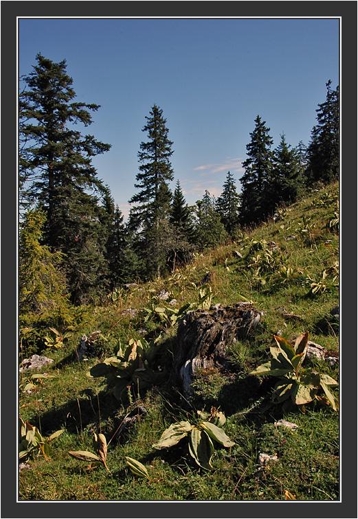 Vue des Alpes - Chasseral<br /> <br /> Riitta & Gilu in Switzerland, August 2004