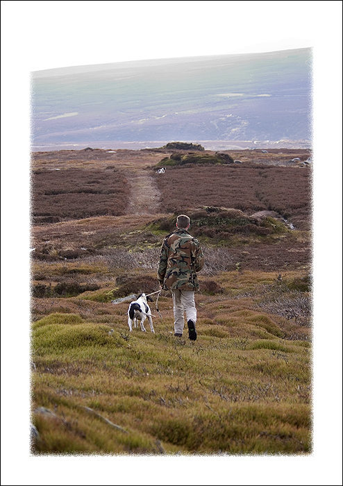 Counting Red Grouse with David Baines and his English Pointers. An unforgettable experience!