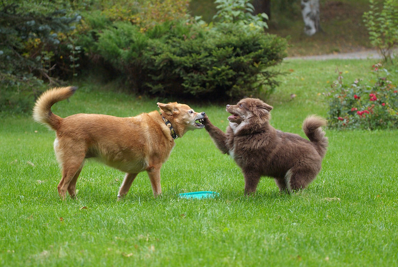 I want that Frisbee!