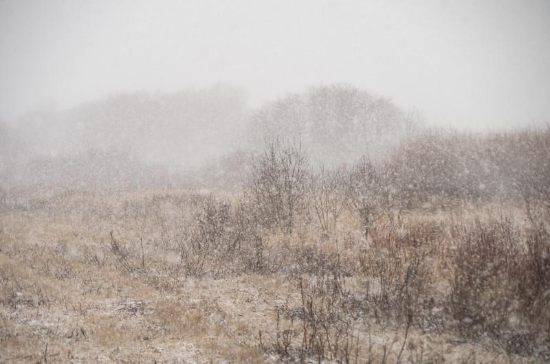 Springtime Snowstorm