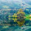 Spring Reflections - Yongbiji