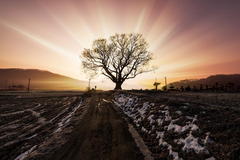 Winter Enlightenment