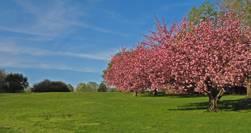 Colonial Park, Somerset, NJ