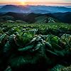 Harvest Sunrise - Anbandeok