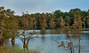 Bee Lake - Eden Mississippi - 2