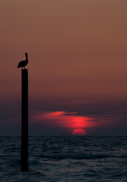 Pelican Gazing at Sunset