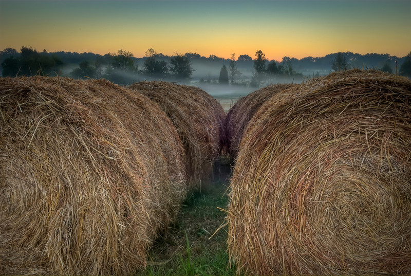 Early foggy morning twilght shot of Madison county Mississippi hay bales.