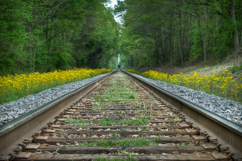 Was out on a afternoon drive with the camera and came upon this railroad crossing lined with wildflowers.  Lucky enough to have a distant train stopped on the tracks for the shot.