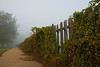 Foggy Path along a Fence