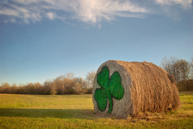St. paddy's Day Hay Bale - This hay bale is always decorated for the current season or holiday. It is in a field very near our home. I enjoy seeing how they are going to decorate it from one holiday to the next.