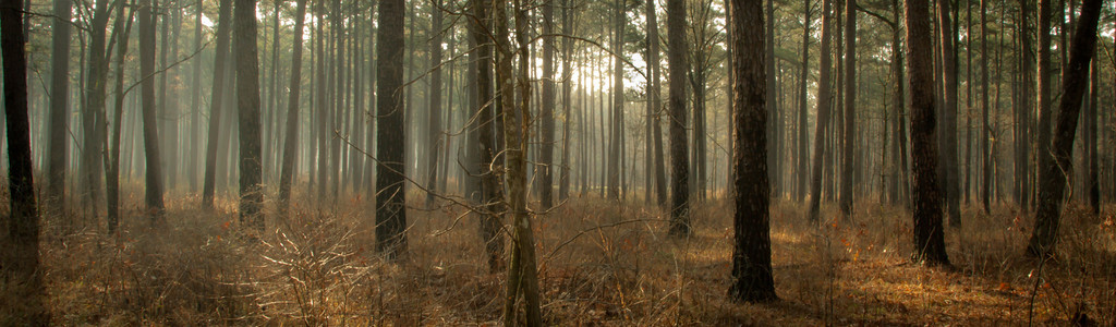 Into the Woods - taken at Harrell Prairie in Scott County Misissippi.
