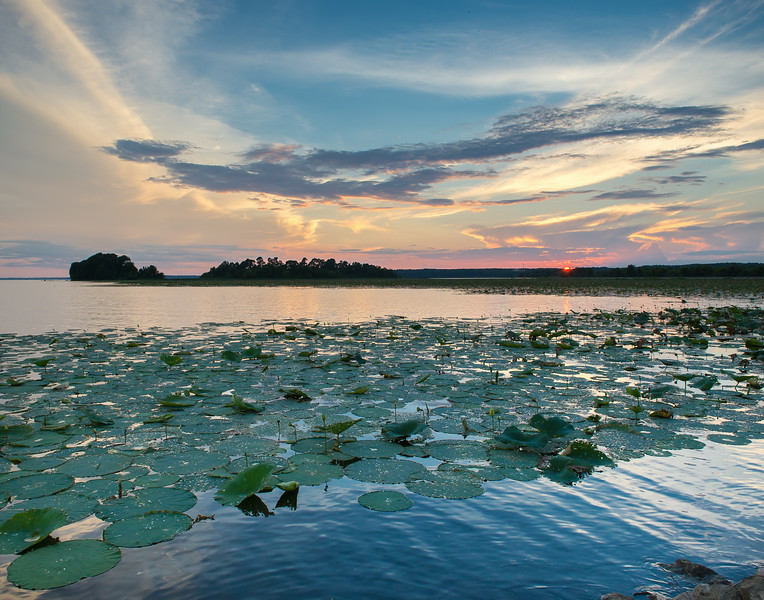 Last Light Over The Lilypads