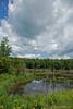 A beaver pond - Lake George, NY