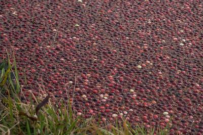 Yarmouth Cranberry Bog 10/19/13