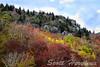 Autumn on the Mountain