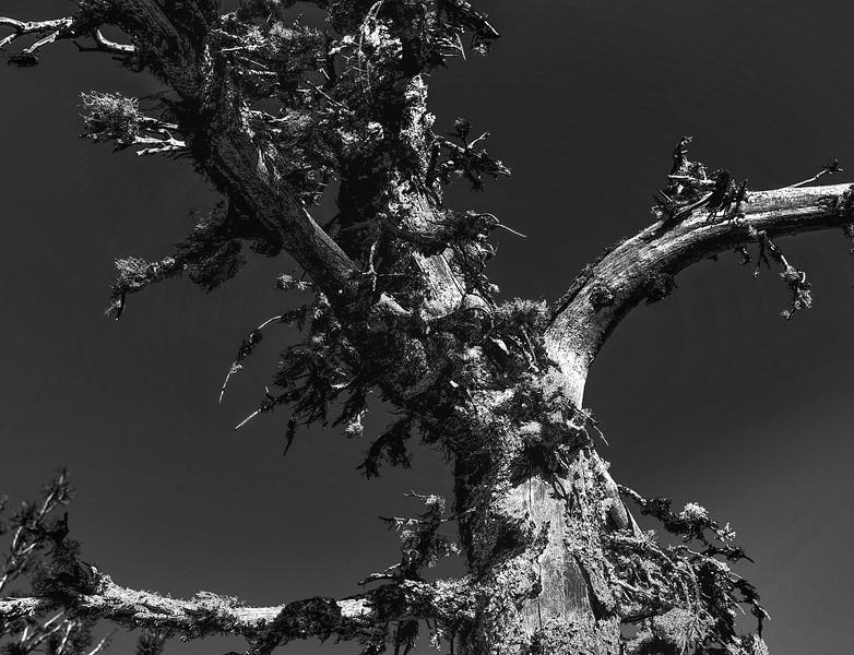 Dead Wood (SM)