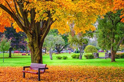 Park bench, Autumn
