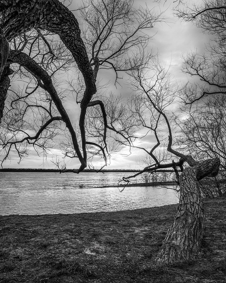 Twisted Trees Along The Mississippi
