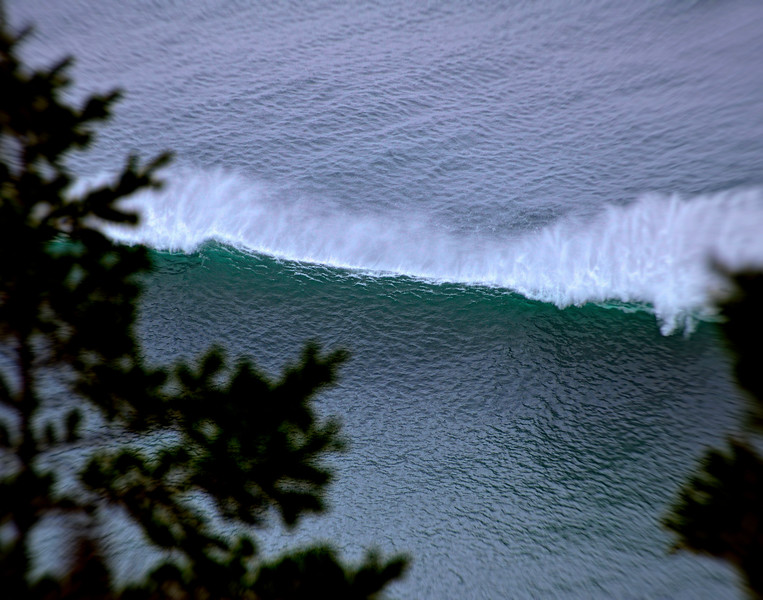 Surf Exemplare (SM)