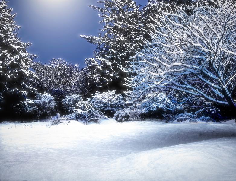 Moonlit Snowy Woods