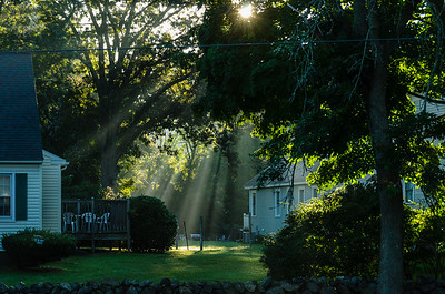 Morning light and mist