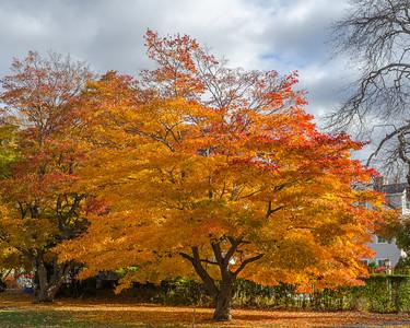 Andover fall colors, horizontal