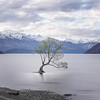 "My take on ""the Wanaka Tree""."