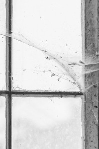 Garage window and spider web (mono)