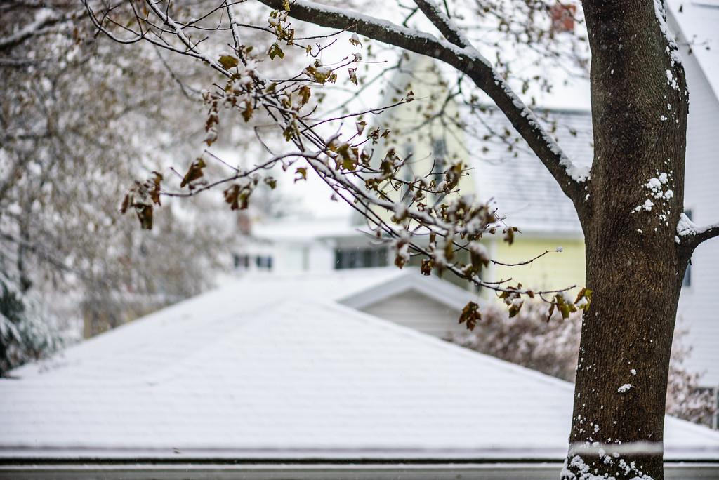 First snow, back yard