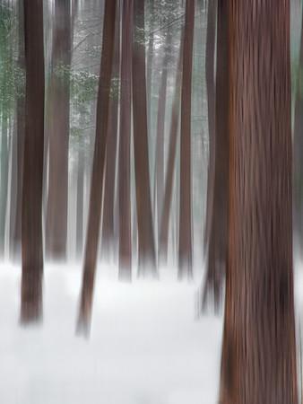 Nature's Veil II