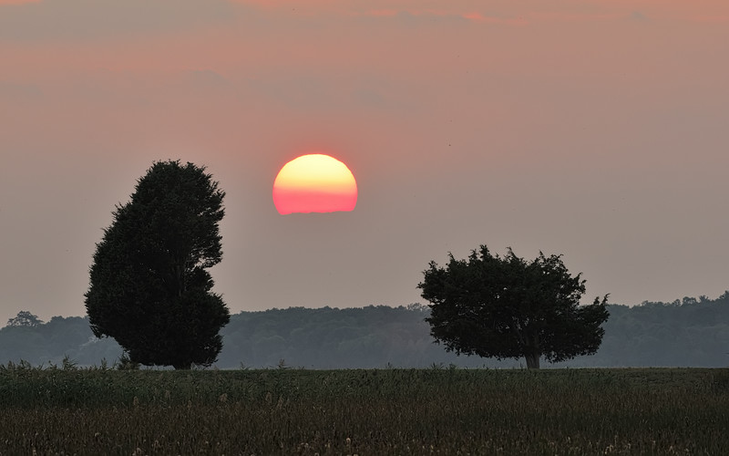 _NW88323 Sunset at the Pacman Tress Plum Island ~ Newbury, MA