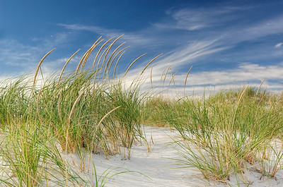 _JFF2474 Dune Grasses in Summer