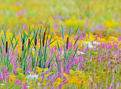 _NW09659 Wet Meadow~ Fall Colors