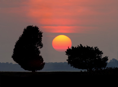 Two Trees at Sunset ~ Plum Island